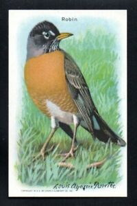 ROBIN 1938 9TH SERIES ARM & HAMMER USEFUL BIRDS OF AMERICA #8 NRMT/NM-MINT