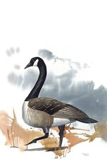 WATERCOLOR SHOWING A CANADA GOOSE EXCELLENT GICLEE PRINT