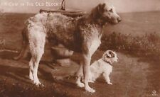 Postcard: Vintage photo repro - Big Irish Wolfhound & Terrier - Jack Russell?