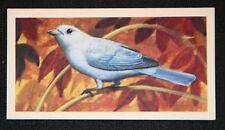 Blue-gray Tanager   Original Vintage Card   VGC
