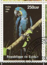 GUINEE - 1998,  timbre 1480, OISEAU ARA HYACYNTHE, oblitéré
