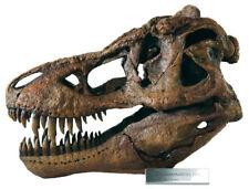 Tyrannosaurus Rex / T.rex - Large Dinosaur Skull Model Replica 1/4 Scale