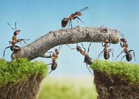 A1| Cool Ant Teamwork Poster Print Size 60 x 90cm Teamwork Poster Gift #16052