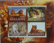 LIONS  Wildcats lion m/s Malawi  2008 MNH IMPERF #F263