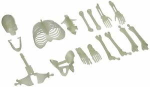 U.S. Toy USTMU75 16 Piece Glow in the Dark Skeleton Box of Bones Action Figure