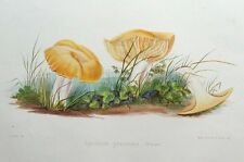 Prado agárico Hongo, Hussey antigüedad ORIGINAL Impresión de hongos seta 1847