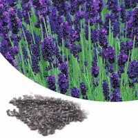 375 Stück seltene lila Lavendel Samen Blumensamen Vegetation Hausgarten_BIN U4A1