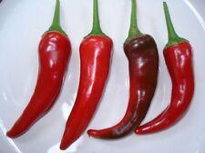 Cayenne Chilli pepper seeds (30) Aussie Grown