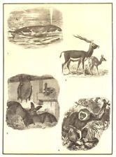 Mammal. Whale-aquatic; Antelope-terrestrial; Bat-aerial; Ape-arboreal 1907