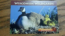 "WISCONSIN WILDCARDS, CANADA GOOSE, WATERFOWL, 3-1/2"" X 2-1/2"""