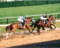 "SECRETARIAT - ORIGINAL  8X10 PREAKNESS STAKES ""LAST TO FIRST""  PHOTO!"
