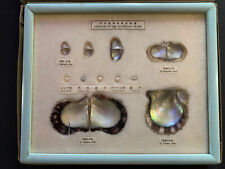 Growth Of The Cultured Pearl Display Case Vintage