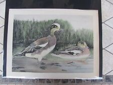 Original 1930  Rex Brasher #137  Hand Colored Bird Print  Baldpate  #137REX2 DSS