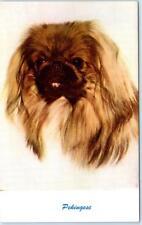 Vintage Postcard Pekingese - Dog