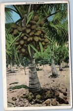 Coconuts in Florida - divided back postcard
