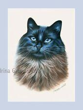 Ragdoll Cat impresión Mago By Irina garmashova