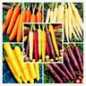 100pcs/bag Carrot seeds fruit vegetable Nutrition organic food seed