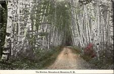 Birches of Monadnock Mountain NH Vintage Postcard O09