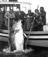 Nova Scotia Bluefin Tuna 1980 OLD FISHING PHOTO