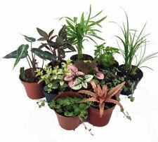 """10 Plants Terrarium & Fairy Garden Live Plant 2"""" Pots Outdoor Indoor Best Gift"""