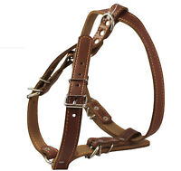 """Real Leather Dog Harness 21-26"""" chest size Spaniel Finnis Spitz Poodle Chow Chow"""