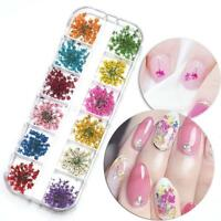 30Pcs 3D Nail Art Design Real Dry Dried  Flowers Manicure Decoration DIY Tips SO