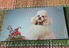 "RETRO POSTCARD: ""The King"" White Poodle DOGS"