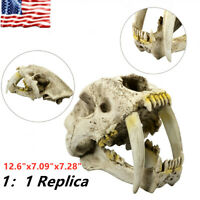 Smilodon Saber Tooth Bone Saber Tiger 1:1 Replica Skull Model Paleontology Resin