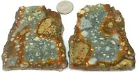 2 Sweet Rocky Butte Owyhee Picture Jaspers Total 7.3 ounces 1st Pic Wet #2366