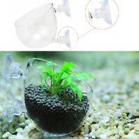 Fish Tank Aquarium Wasserpflanze Glas Tasse Red Garnelen Halter w/