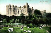 Arundel Castle postcard antique vintage colour printed sheep landscape