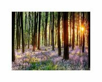 Bluebell Wood Sunrise Trees Photo Art Picture Canvas Print
