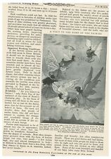 Home of the Fairies, Book Illustration (Print), c1920