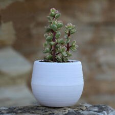 Cute Round Small Home Garden Office Decor Planter Plastic Plant Flower Pots