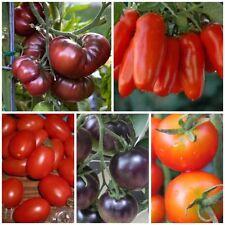 Tomaten-Gemüsesamen für volles Sonnenlicht und den Sommer