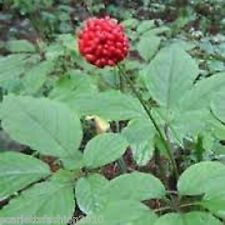 Rare Hardy Chinese / korea panax ginseng seeds Wild ginseng seed 20 seeds