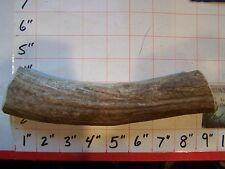 1 JUMBO Natural Elk Antler Dog Chews Treats Medium CORE Organic Antler Chew