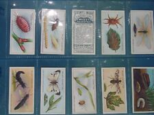 GARDEN LIFE A Series of 50 Will's Cigarette Trading Cards by W. D. & H. O. Wills