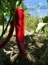 San Jose Chile spicy treat