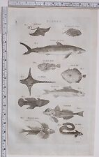 1788 ANTIQUE PRINT FISHES CANIS SEA EAGLE GOAT FISH GRAYLING EEL DRACUNCULUS