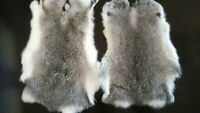 2x Real Rabbit Skin Natural Tanned Leather Hide for Animal Training Dummy Craft