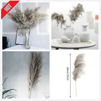 Gray Natural Dried Pampas Grass Reed Flower Bunch Bouquet Party Decor Home O4E2