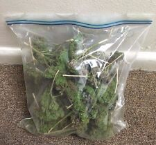 1 Bag of 50 Natural Dried Floral Arrangements Green Filler  NEW