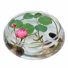 20pcs Pink Chinese Bowl Lotus flower seeds Garden Aquatic plants