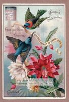 Gold Tanager And Night Blooming Orchid Cactus1896 Trade Ad Card