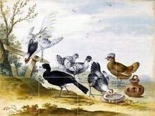 Poultry Tile Mural Kitchen Bathroom Wall Backsplash Art 24x18