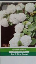 Japanese Snowball Tree Healthy Home Garden Plants Landscape Trees Plant Flower