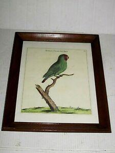 Framed Vintage Bird Print Lithograph Plate #15 E. Albrin del. June 21, 1736