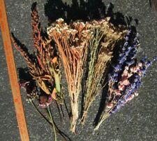 Mixed Dried Lot of 18+ Stems:Larkspurs,Yarrow, Echinacea, Statice & Hardhack