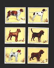 cigarette cards dogs large 1934 full set